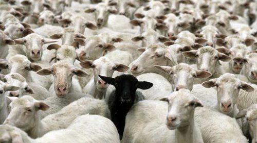O nație de căprari. Dar fără capre